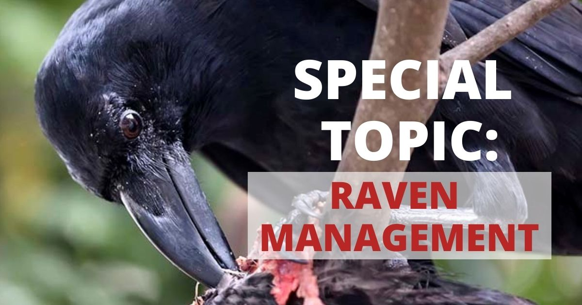 Call for Papers: Ravens