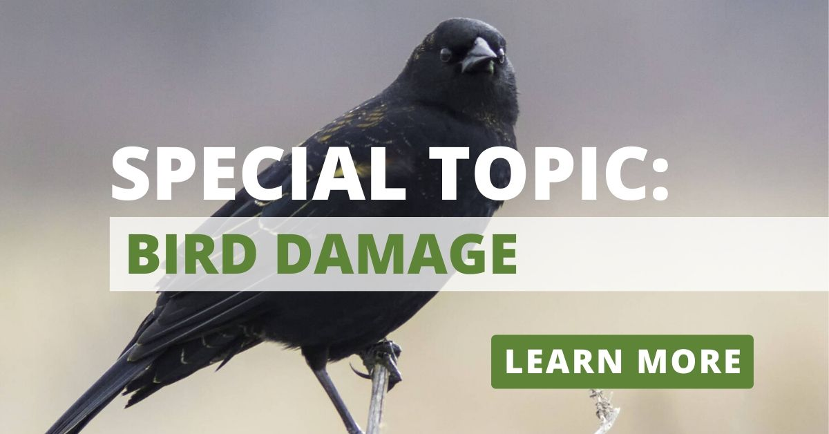 Call for Papers: Bird Damage Management