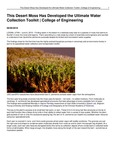 This Desert Moss Has Developed the Ultimate Water Collection Toolkit | College of Engineering