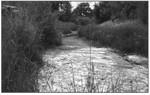 Fish Creek by USU Extension